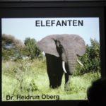 Vortrag Elefanten