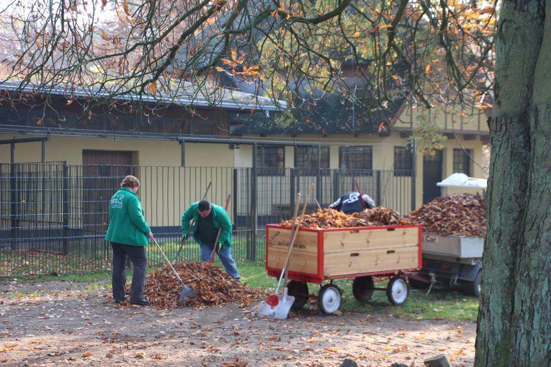 Arbeitseinsatz Laubharken 2015