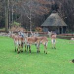Sonntagsführung November 2015 - Tieraffen