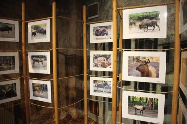 huftiere im zoo rostock neue ausstellung im zoo rostocker zooverein. Black Bedroom Furniture Sets. Home Design Ideas