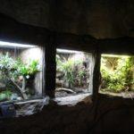 Umbau Terrarien Darwineum
