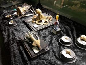 Glasmodelle - Blaschka-Ausstellung im Darwineum