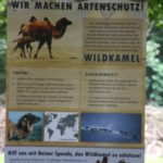 Schild Artenschutz Wildkamele (Rostocker Zooverein) - Artenschutztag 2017
