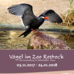 """Plakat zur Ausstellung """"Vögel im Zoo"""""""