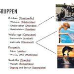 Hauptgruppen der Meeressäuger - Vortrag Meeressäuger im Rostocker Zooverein
