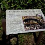 """Artenschutzprojekt - Europäische Sumpfschildkröte"""""""