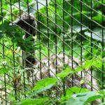 Emu-Kücken Zoo Rostock