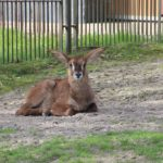 Pferdeantilope - Sonntagsführung Rostocker Zooverein