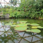 Amazonica Zoo Rotterdam