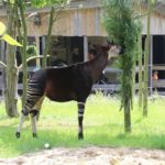 Okapi Zoo Rotterdam
