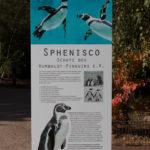 Auch der Rostocker Zoo beteiligt sich am Schutz für die Humboldtpinguine